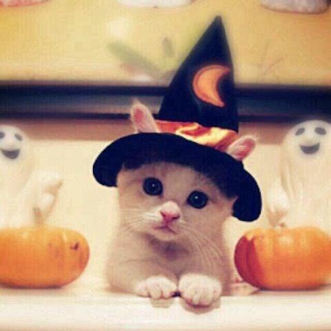 [CONCOURS] Octobre 2015: Halloween s'attaque à vos oreilles! H9684510