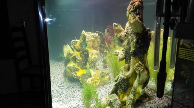 Quelles races et quantité de poissons dans un 240 litres? Img_2010