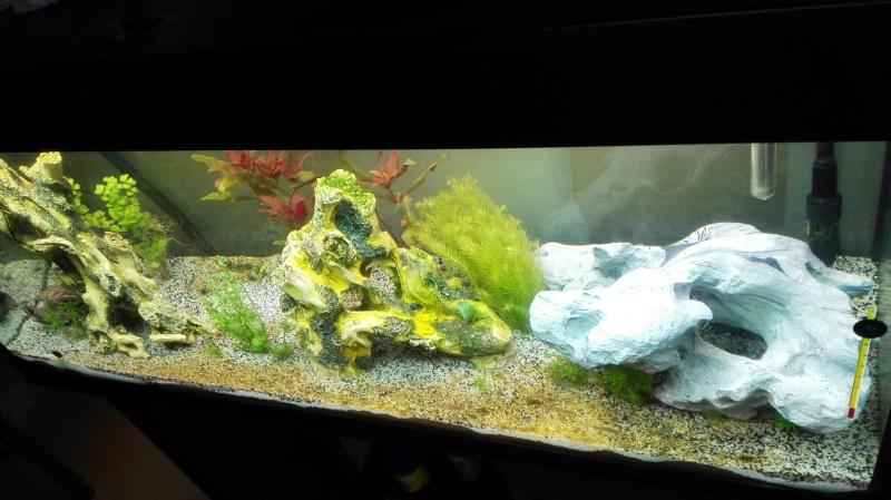 Quelles races et quantité de poissons dans un 240 litres? Img_2011