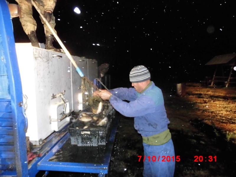 Запуск рыбы КАРП-2015г. Dsci6317