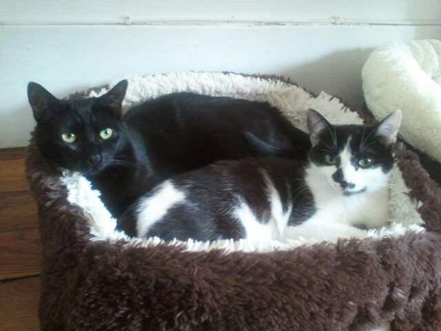 Nos amis les chats. 11_210