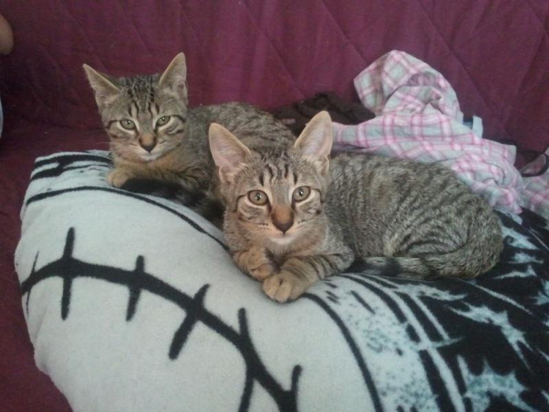 Nos amis les chats. 2011-011