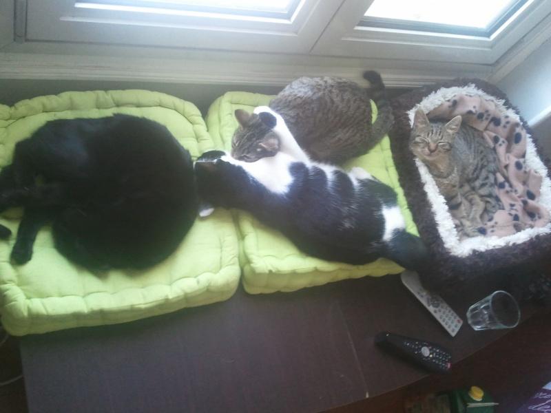 Nos amis les chats. 2011-110