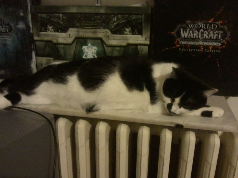Nos amis les chats. 2012-013
