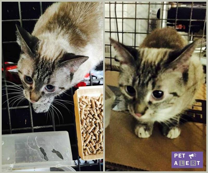 Photos des chats sauvés, avant/après - Page 8 Elisha18