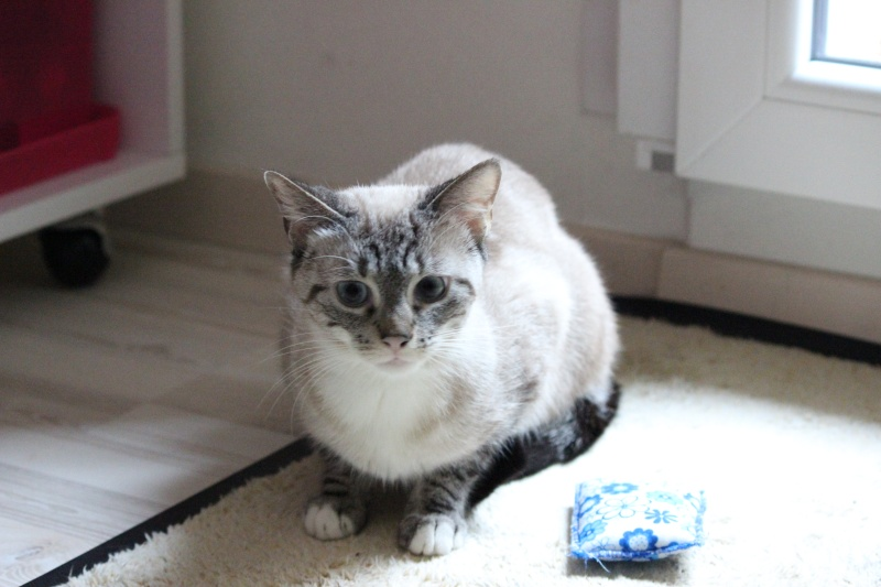 Photos des chats sauvés, avant/après - Page 8 Img_7617