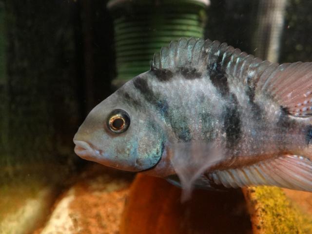 Ma Fish'étagère et les autres  - Page 13 14414810