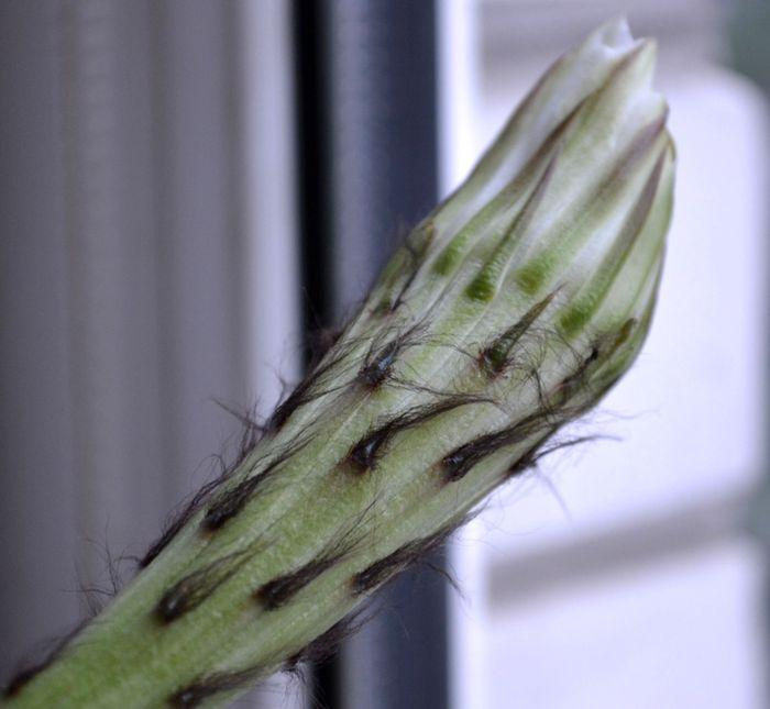 Комнатные цветы Dsc_2712