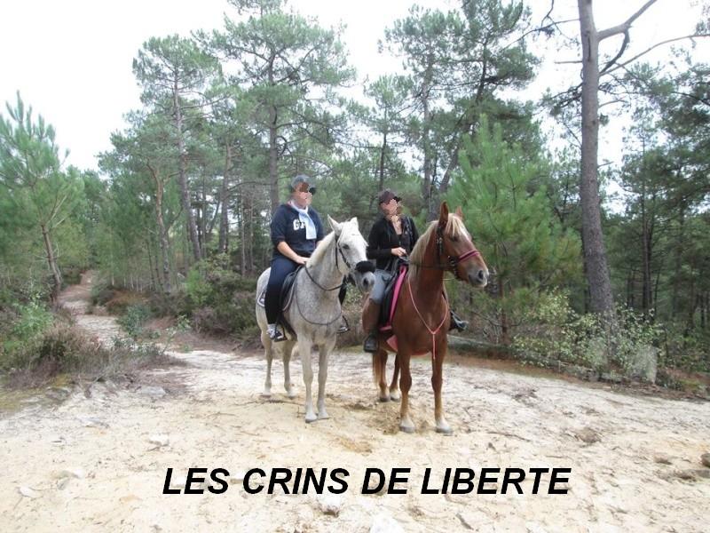 (Dept 77) CADUCEE - ONC Selle/appaloosa - adopté par Mr et Mme Gaschet (2013/Octobre 2015) - Page 4 12027710
