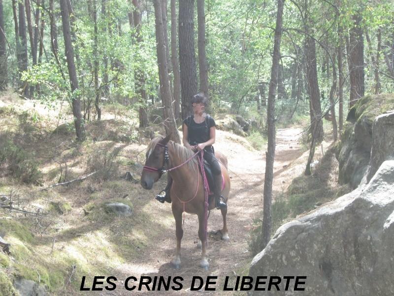 (Dept 77) CADUCEE - ONC Selle/appaloosa - adopté par Mr et Mme Gaschet (2013/Octobre 2015) - Page 4 Img_0311