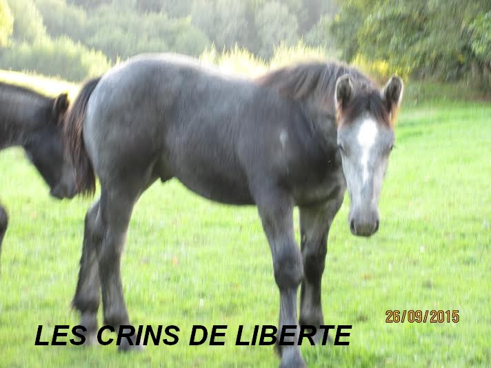 (Dept 87) FILOU DES FONTS - Percheron PP -  Sauvé par Charlotte C. (Février 2016) - Page 4 Unname59