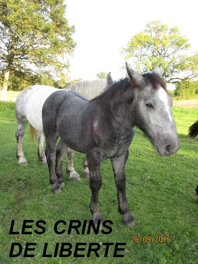(Dept 87) FILOU DES FONTS - Percheron PP -  Sauvé par Charlotte C. (Février 2016) - Page 3 Unname61