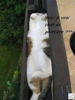 humour sur les chats et compagnie Chatgo10