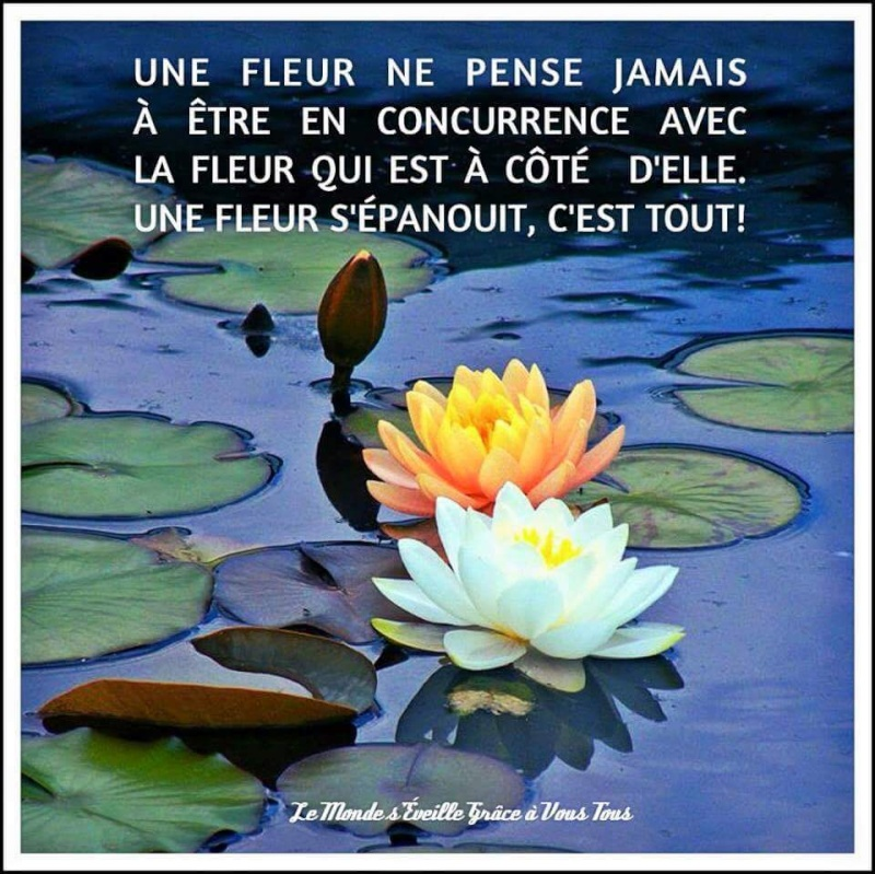 Citations que nous aimons - Page 2 Fb_img10