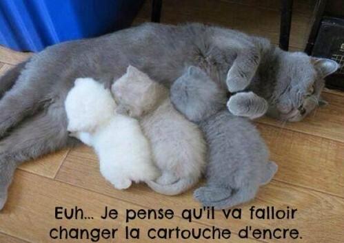 humour sur les chats et compagnie Humour10