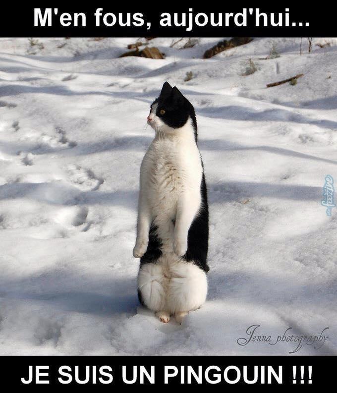 humour sur les chats et compagnie Pingou10