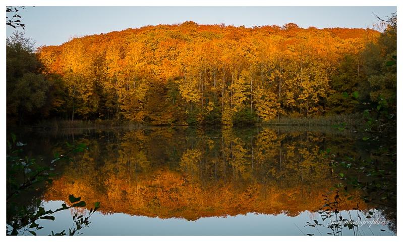 Reflet d'automne _dsc9811