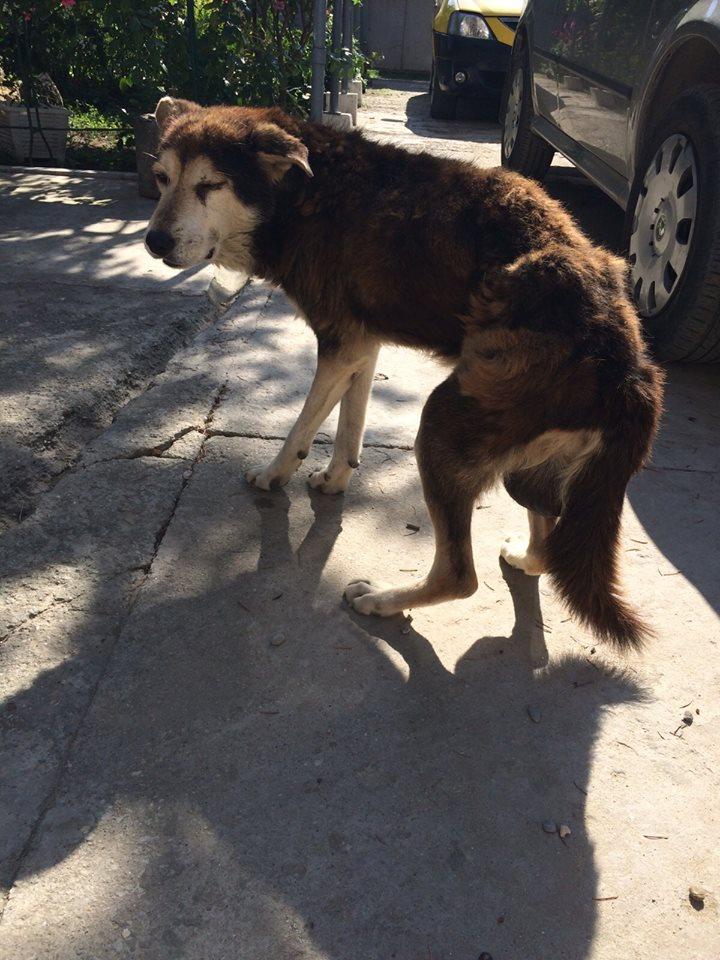 Besoin de médicaments pour un chien de 16 ANS ans en Roumanie 10389610