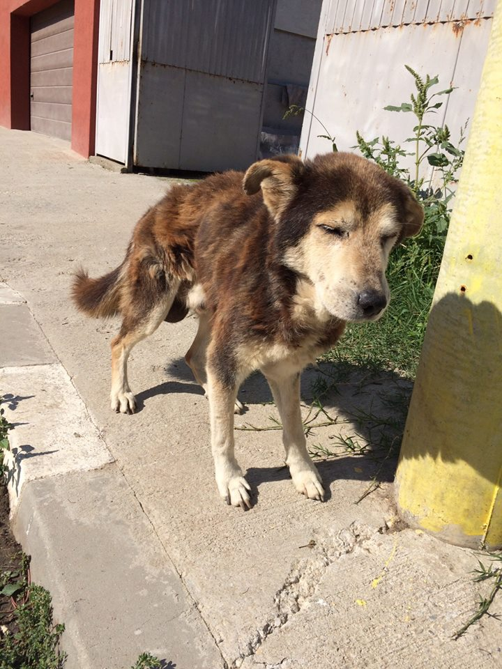 Besoin de médicaments pour un chien de 16 ANS ans en Roumanie 12079310