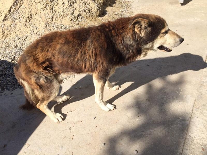 Besoin de médicaments pour un chien de 16 ANS ans en Roumanie 12088310