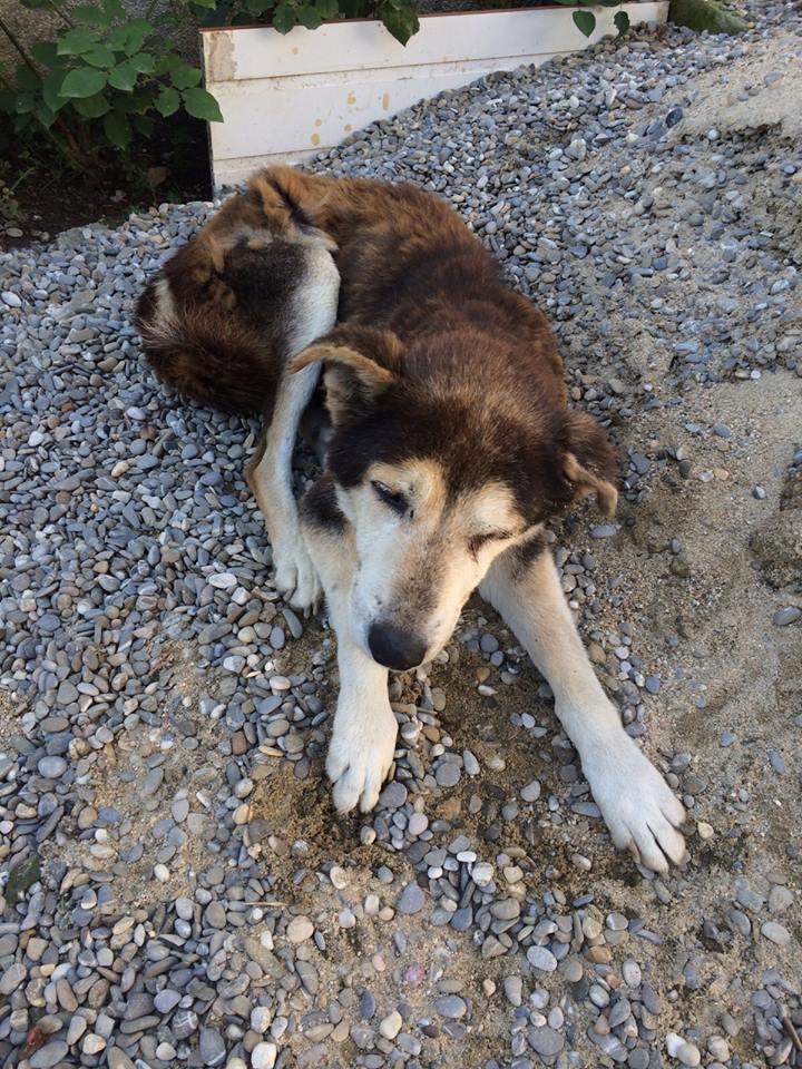 Besoin de médicaments pour un chien de 16 ANS ans en Roumanie 12143210