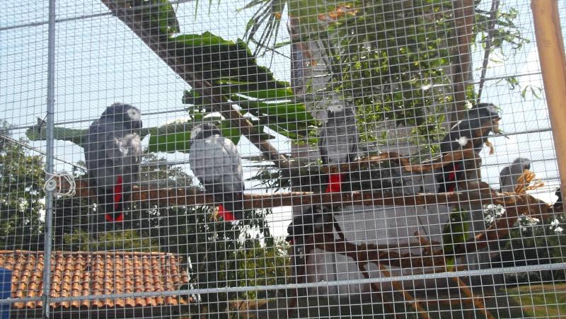 Bourse aux oiseaux et expo 2015-015