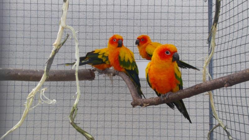 Bourse aux oiseaux et expo 2015-017