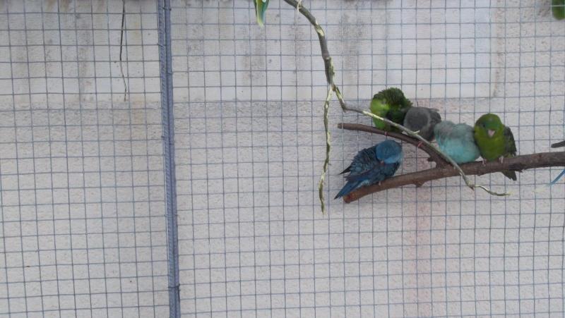 Bourse aux oiseaux et expo 2015-018