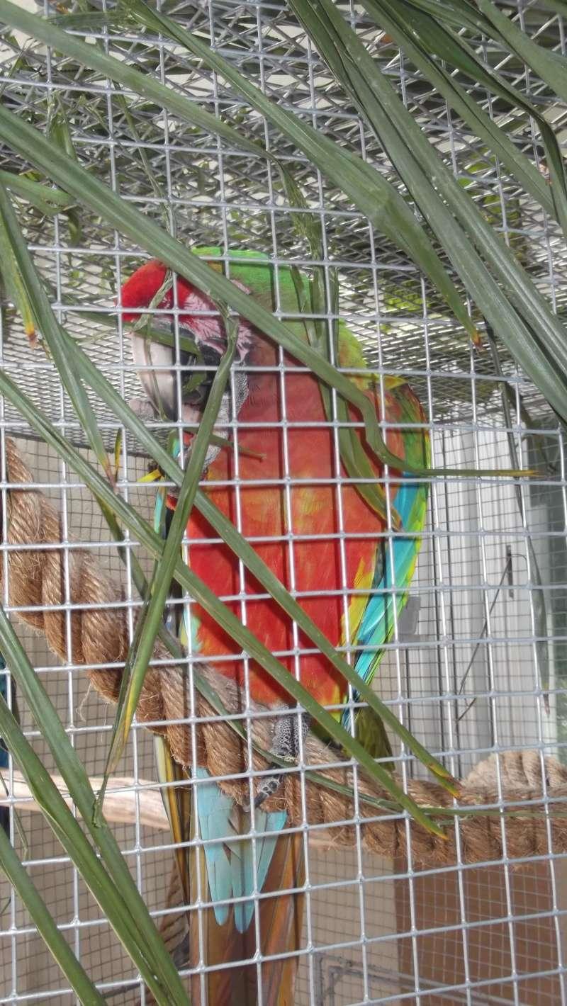 Bourse aux oiseaux et expo 2015-020