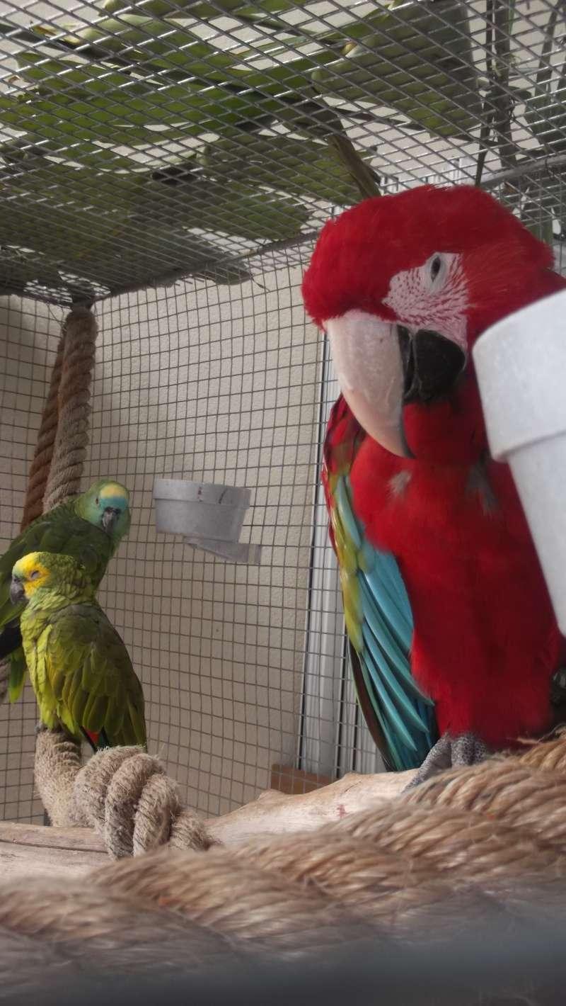Bourse aux oiseaux et expo 2015-021