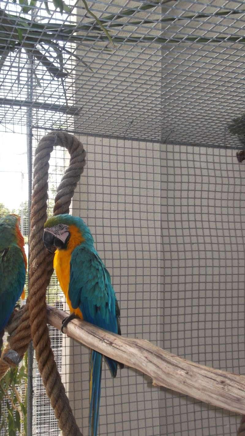 Bourse aux oiseaux et expo 2015-022