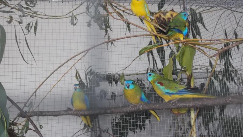 Bourse aux oiseaux et expo 2015-024