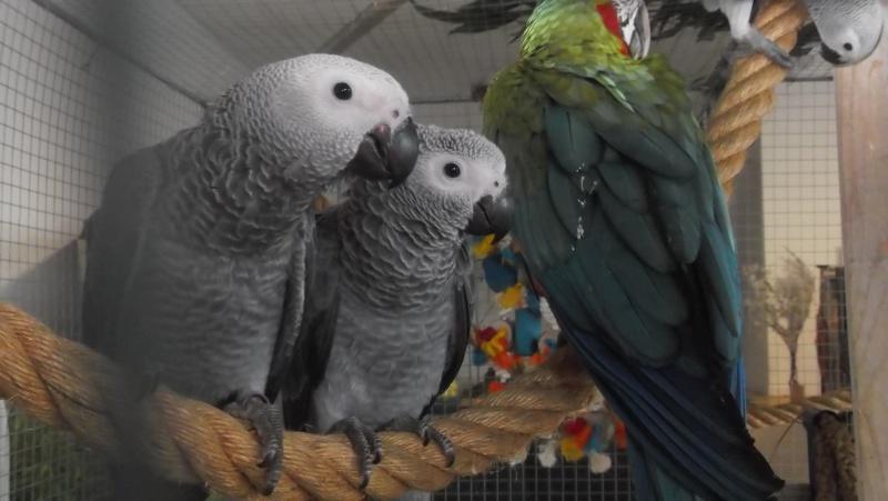 Bourse aux oiseaux et expo 2015-026