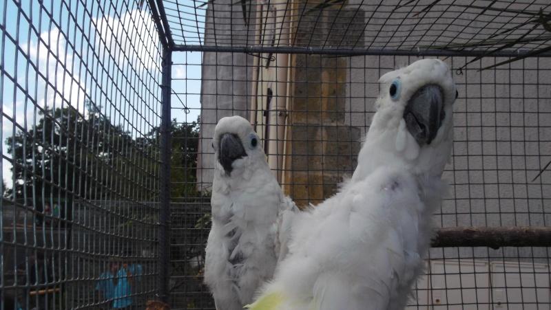 Bourse aux oiseaux et expo 2015-029