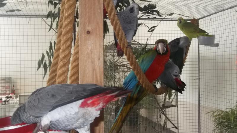 Bourse aux oiseaux et expo 2015-033