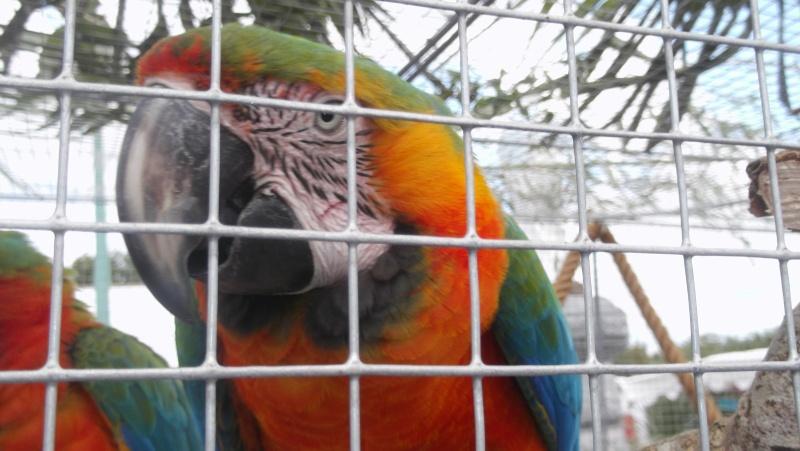Bourse aux oiseaux et expo 2015-041