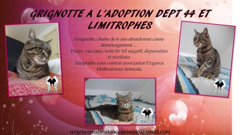 GRIGNOTTE - Femelle Tigrée - 10/2009 - UMA (44) Grigno10