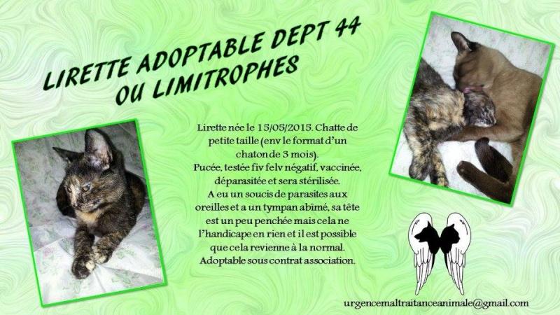 LIRETTE - Ecaille de tortue petit format - 05/2015 - UMA (44) Lirett10