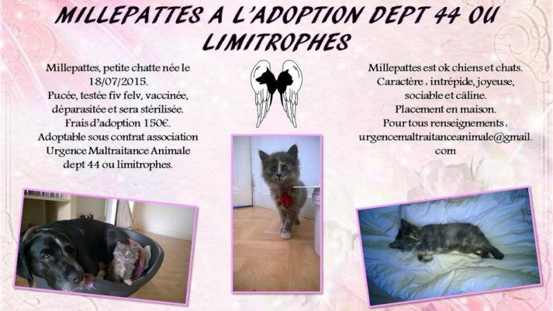MILLEPATTES - Ecaille de tortue - 07/2015 - UMA (44) Millep10