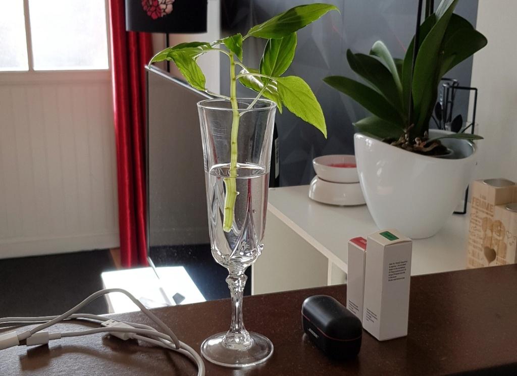 Ma Salle de séjour transformée pour les plantes en Vérandas pff !!! - Page 3 Resize10