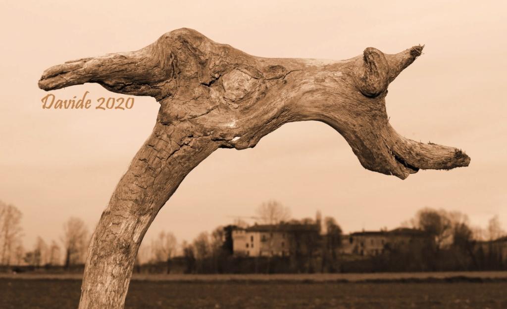 FORME SFUGGENTI 51 – CASTELBARCO (11-13 febbraio 2020) Img_0811