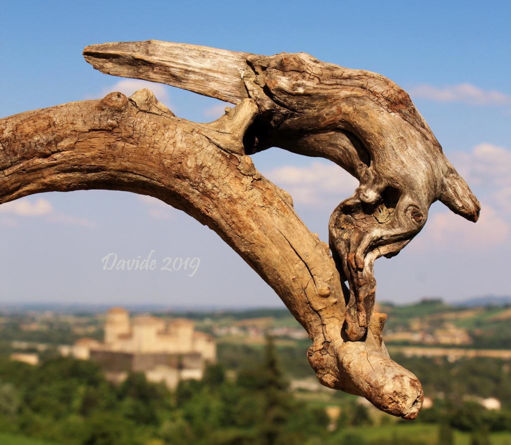 FORME SFUGGENTI 31 - CASTELLO DI TORRECHIARA (19-20 giugno 2019) Img_5010