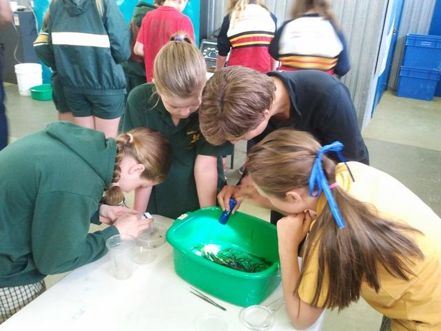 Workshop at Ricketts Point, Beaumaris 2015-121