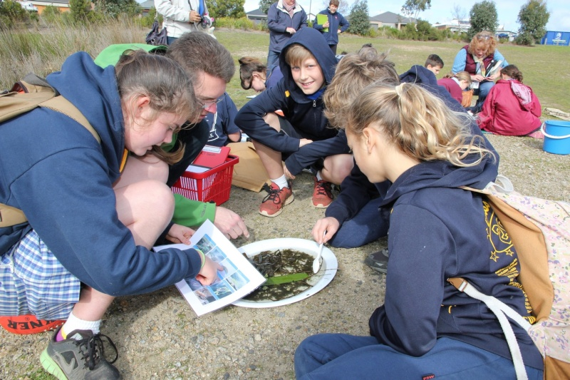 Ambassadors in Action during Term 3 Img_2921