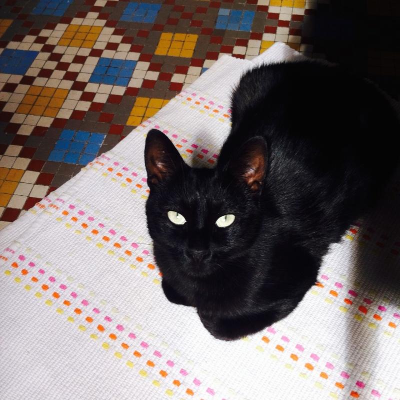 Jenga, femelle type européenne noire estimée née 15/10/2014 - Page 3 Img_6211