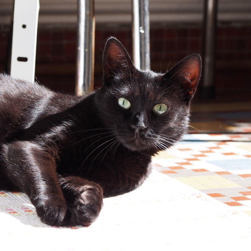 Jenga, femelle type européenne noire estimée née 15/10/2014 - Page 3 P9023610