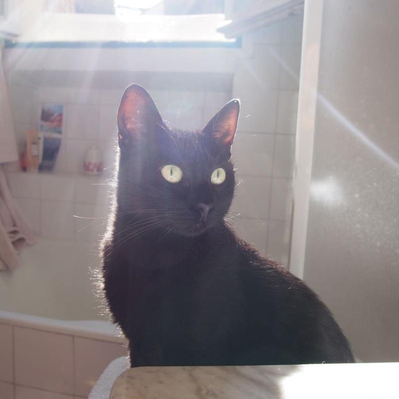 Jenga, femelle type européenne noire estimée née 15/10/2014 - Page 3 P9053610