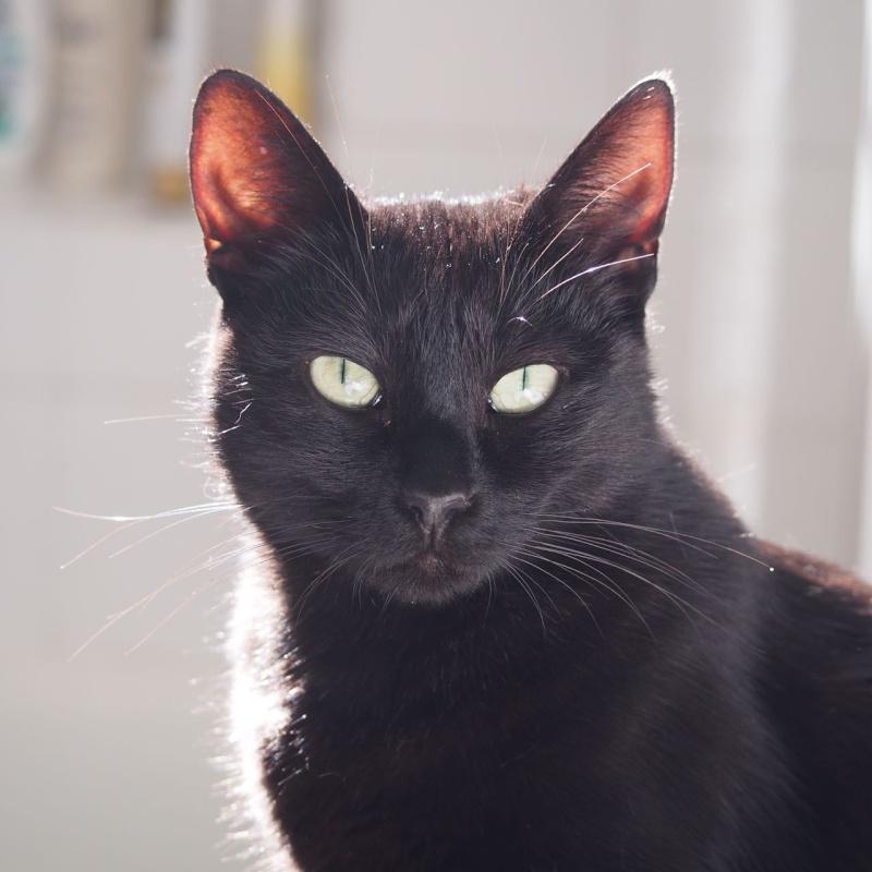 Jenga, femelle type européenne noire estimée née 15/10/2014 - Page 3 P9053611