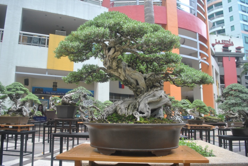 American Bonsai at the NC Arboretum - Page 23 Dsc_0017