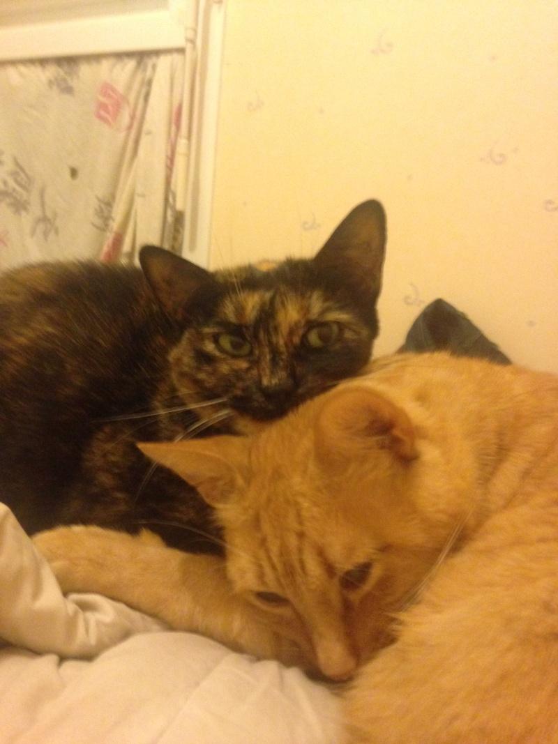 Nos amis les chats. Img_0010